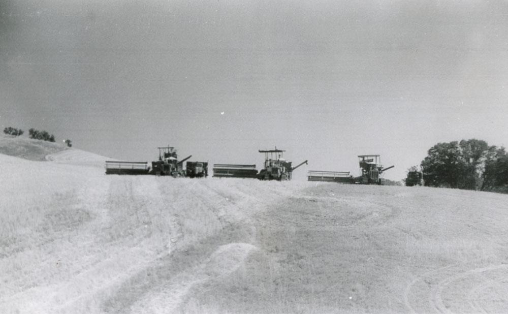 Wheat farming.
