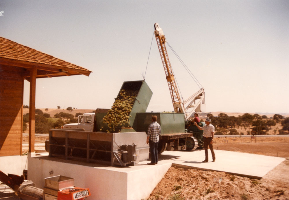 Crushing Cabnernet Sauvignon at Eberle Winery, 1985.