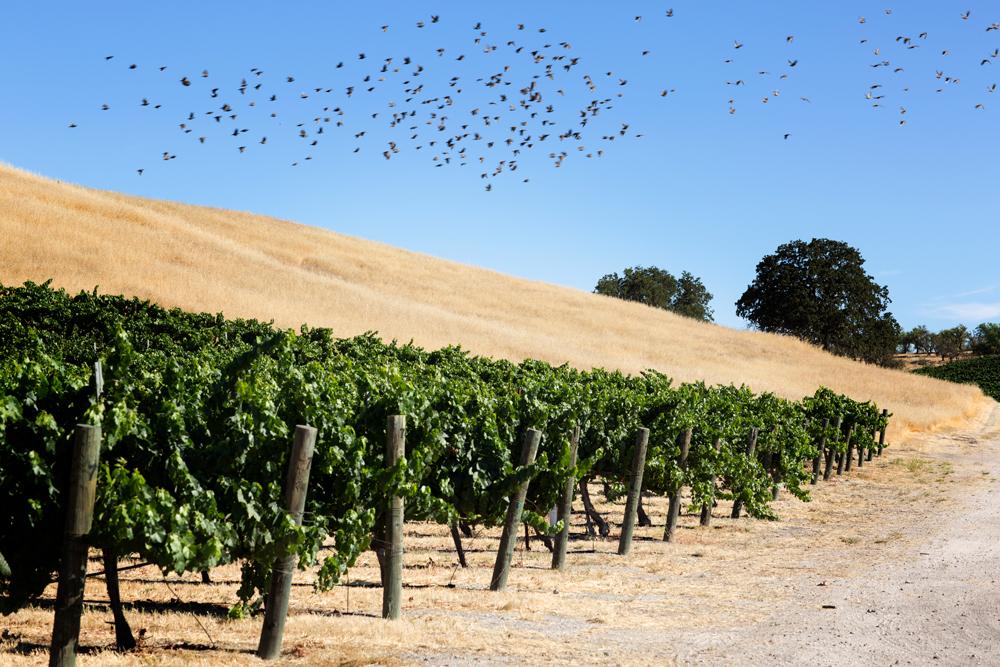 Victor Hugo Roberts Winery