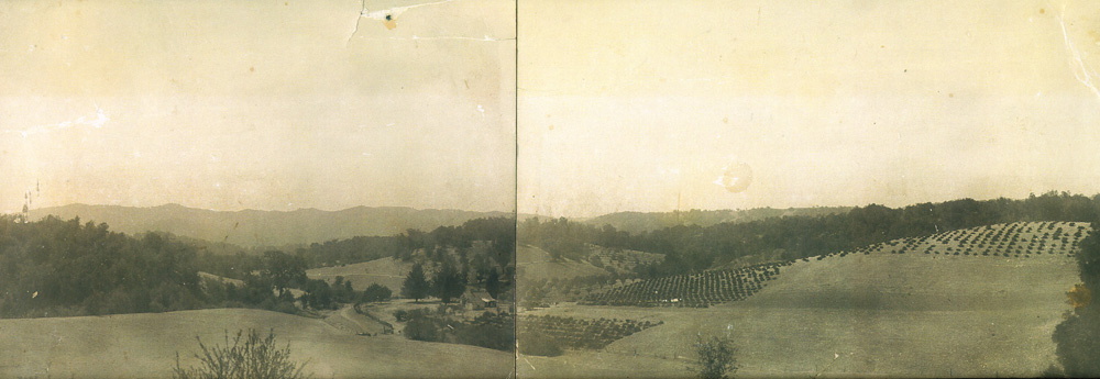 1908 Casteel Ranch, Panoramic photo of Ranch with Mission grape vineyard already planted when Casteels bought property in 1912.