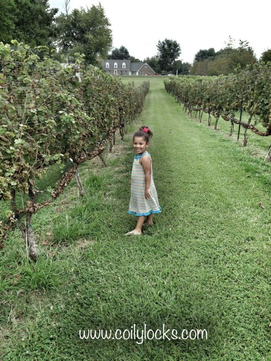 Purple Toad Winery 5