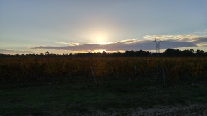 sun-rising-above-leoville-poyferre-vineyards