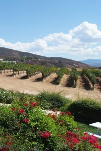 Picturesque scenery at Leoness Cellars in the heart of Temecula Wine Country