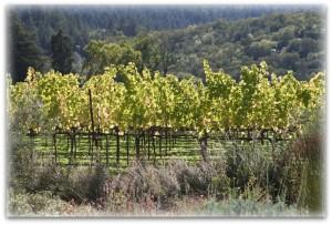 Larkmead Vineyards