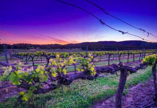 Iconic Victorian Winery and vineyard for sale