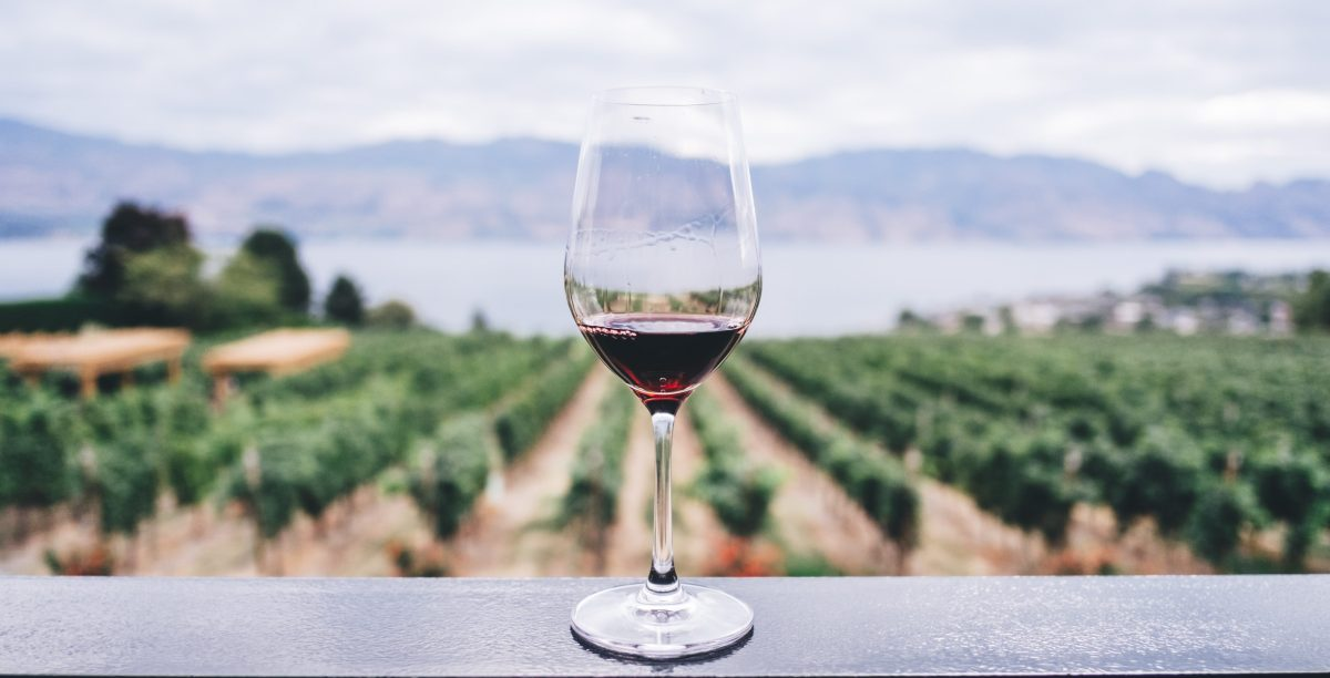 Red wine class in vineyard