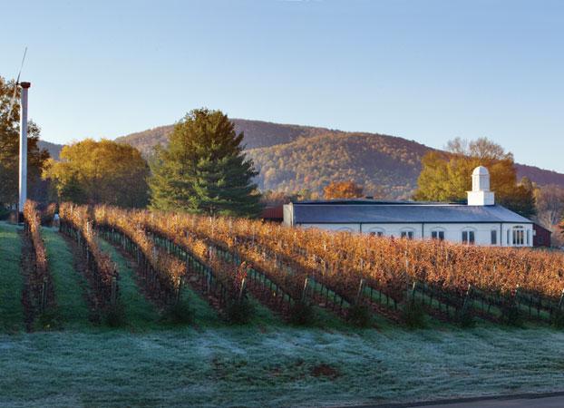 Virginia vineyards