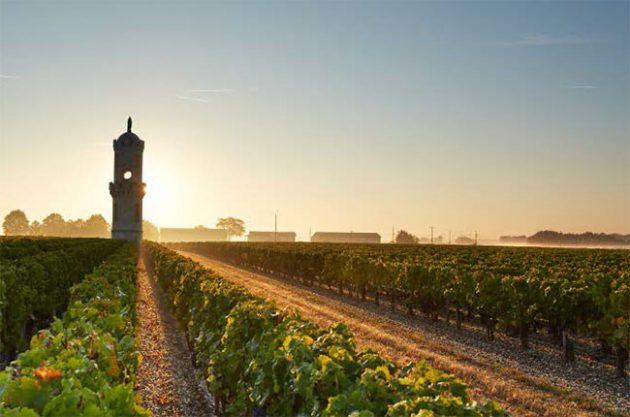 Château Haut-Batailley vineyards, bordeaux