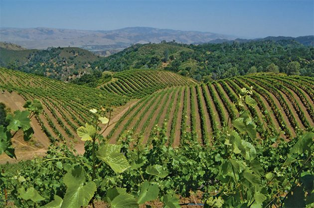 Duckhorn buys California Pinot maker Calera