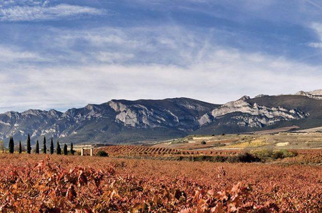 Anson: Rioja single vineyard ruling – Five key questions answered