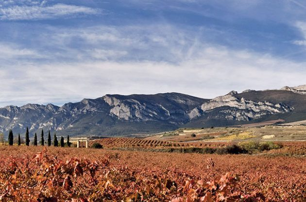 Anson: Rioja single vineyard ruling – Five key questions answered