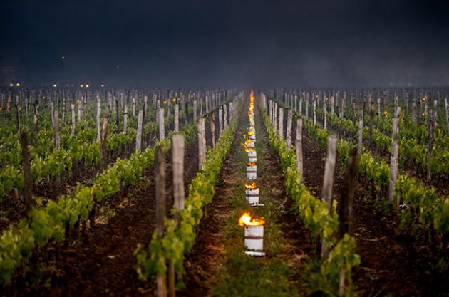 bordeaux vineyard frosts 2017