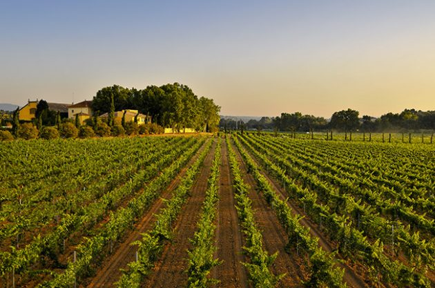 Zero emissions winery possible in 15 years, says Torres