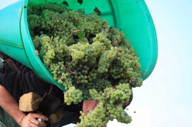 Loire 2017 harvest shows mixed fortunes after frost