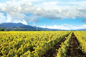 Napa Valley wineries head off Brexit with UK name ruling