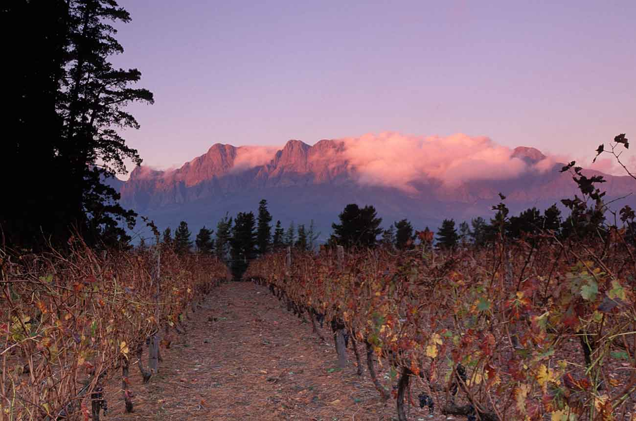 Jefford: South Africa – Shocks, surprises and inspiration