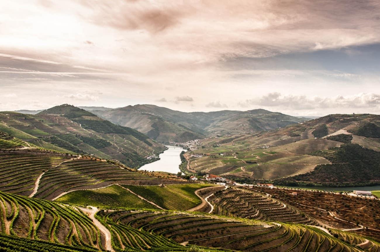 Quinta do Noval buys prized vineyards in Douro