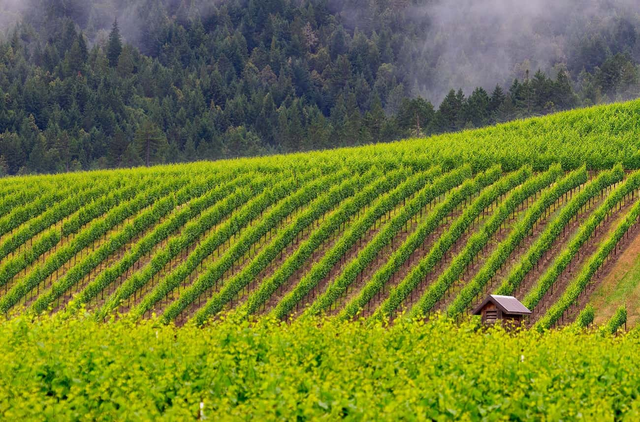 Jackson Family Wines buys winery in California's Anderson Valley