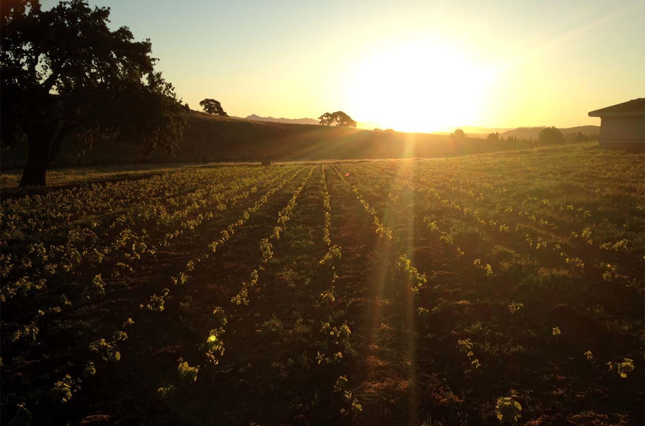California's Bonny Doon Vineyard sold