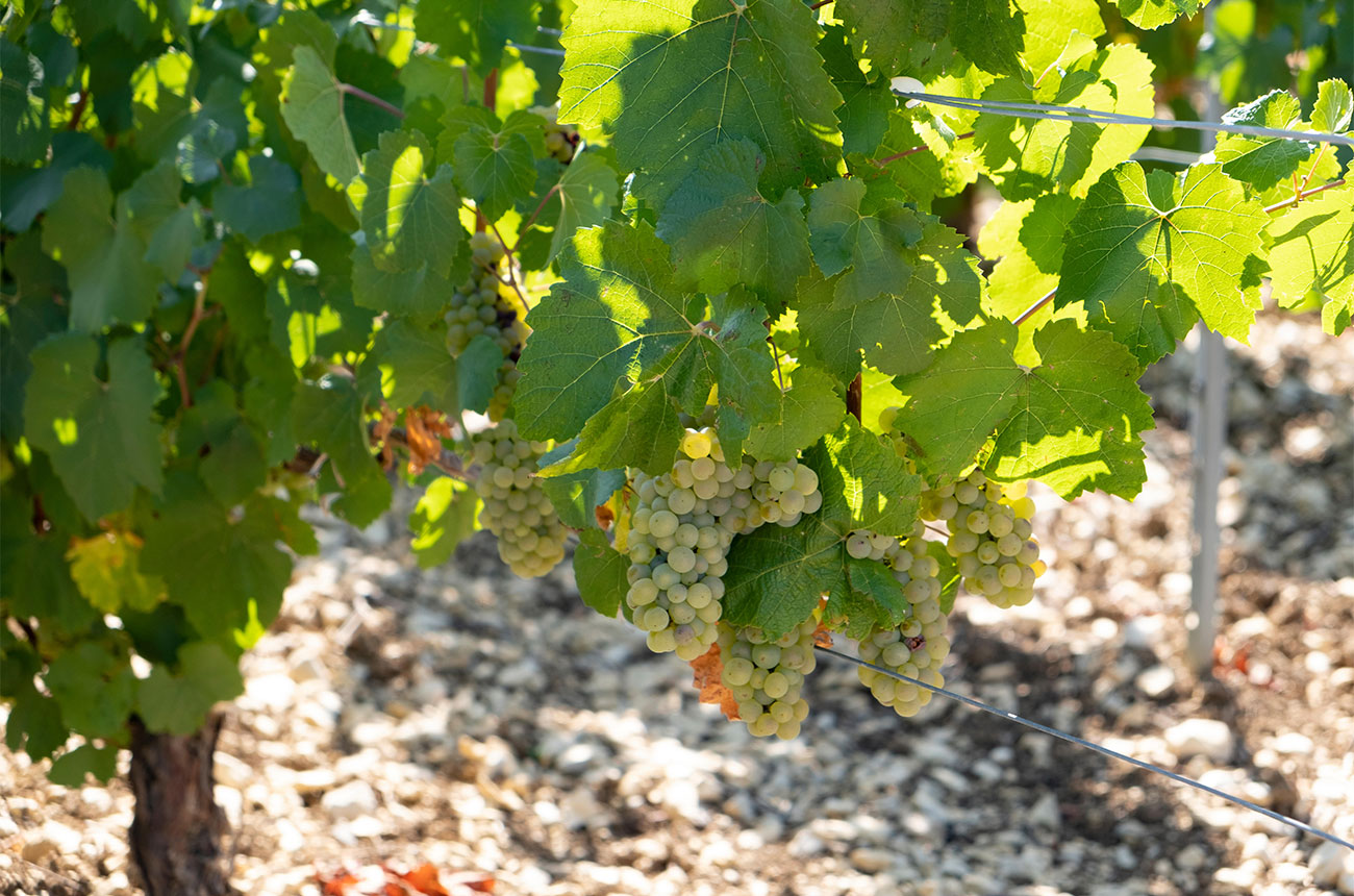 Minerality in wine: Where are we now?