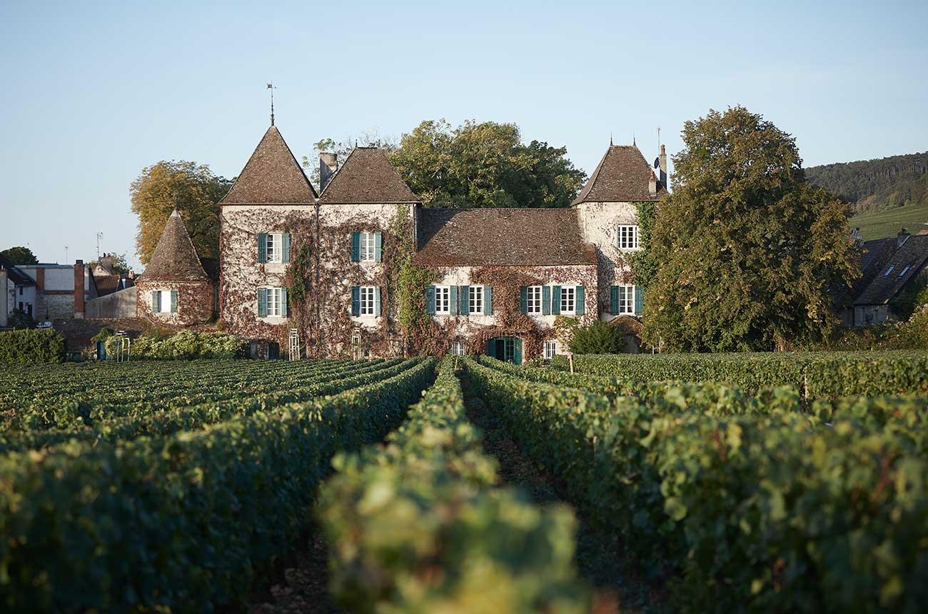 Hunting Burgundy vineyards: Domaine de la Commaraine's 'rebuild' plan