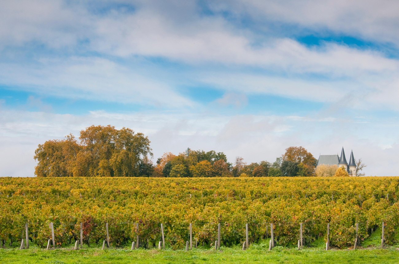 Best St Julien 2019 wines tasted en primeur