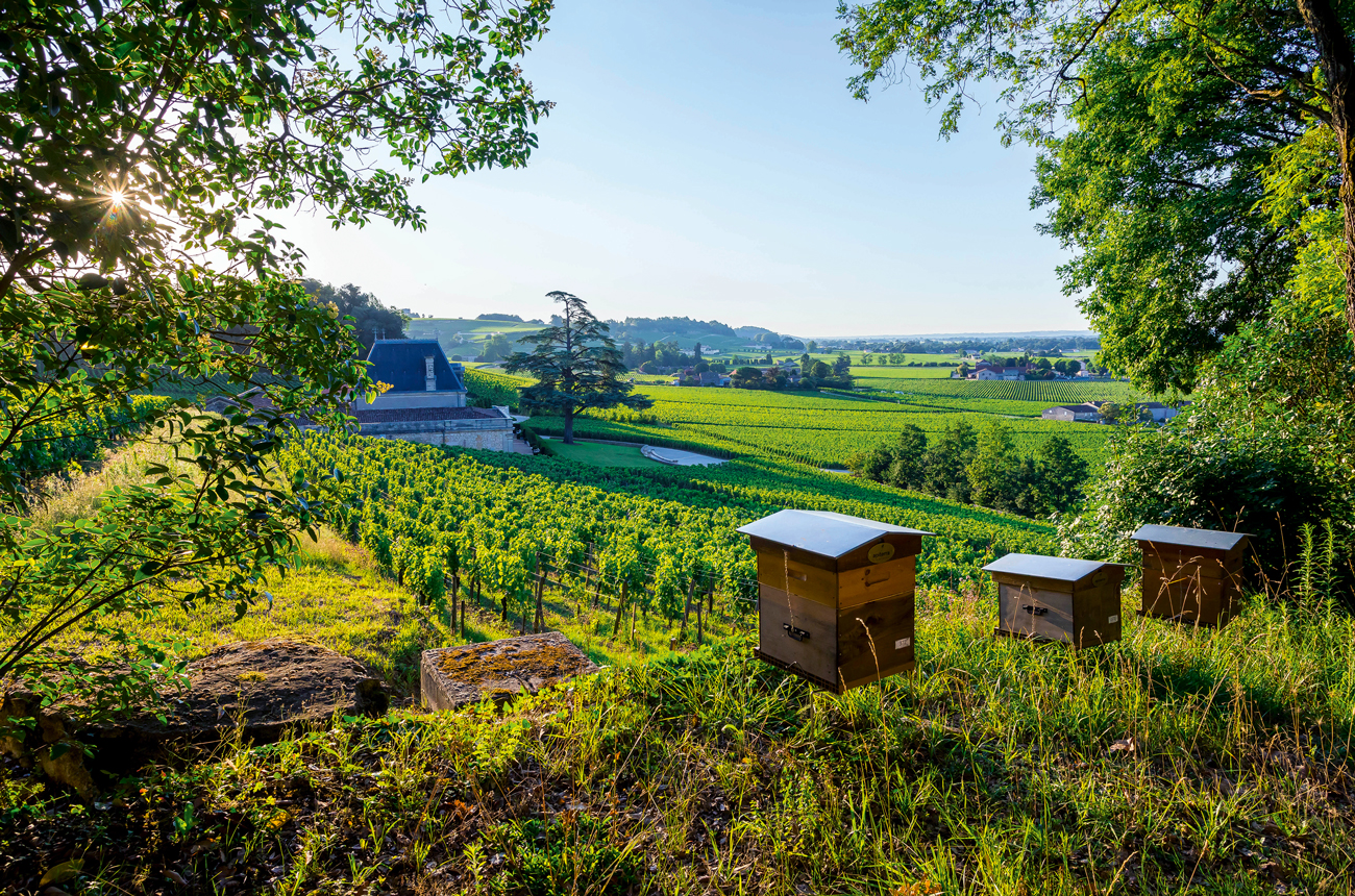Taking exciting new directions: 10 Bordeaux producers to watch