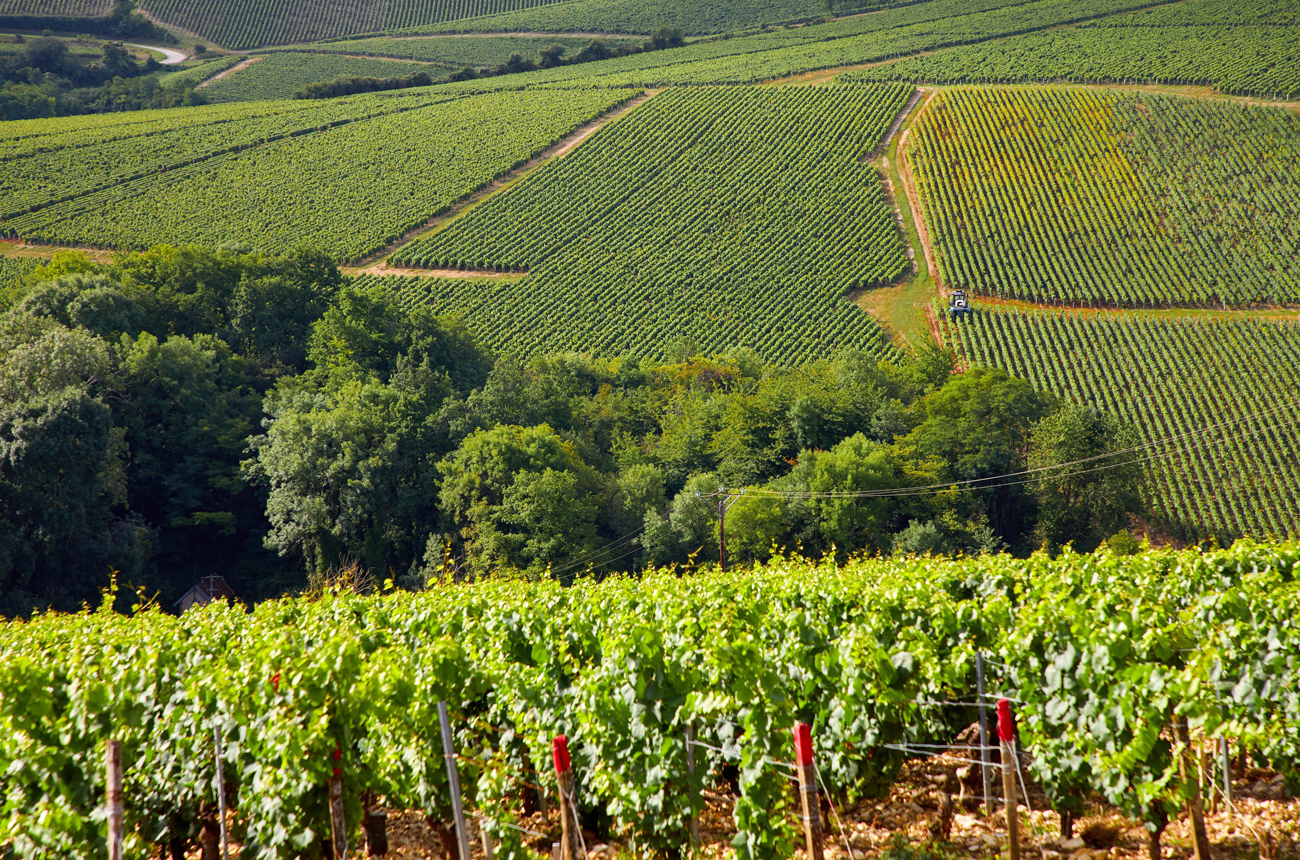 Top five Chablis vintages to drink now