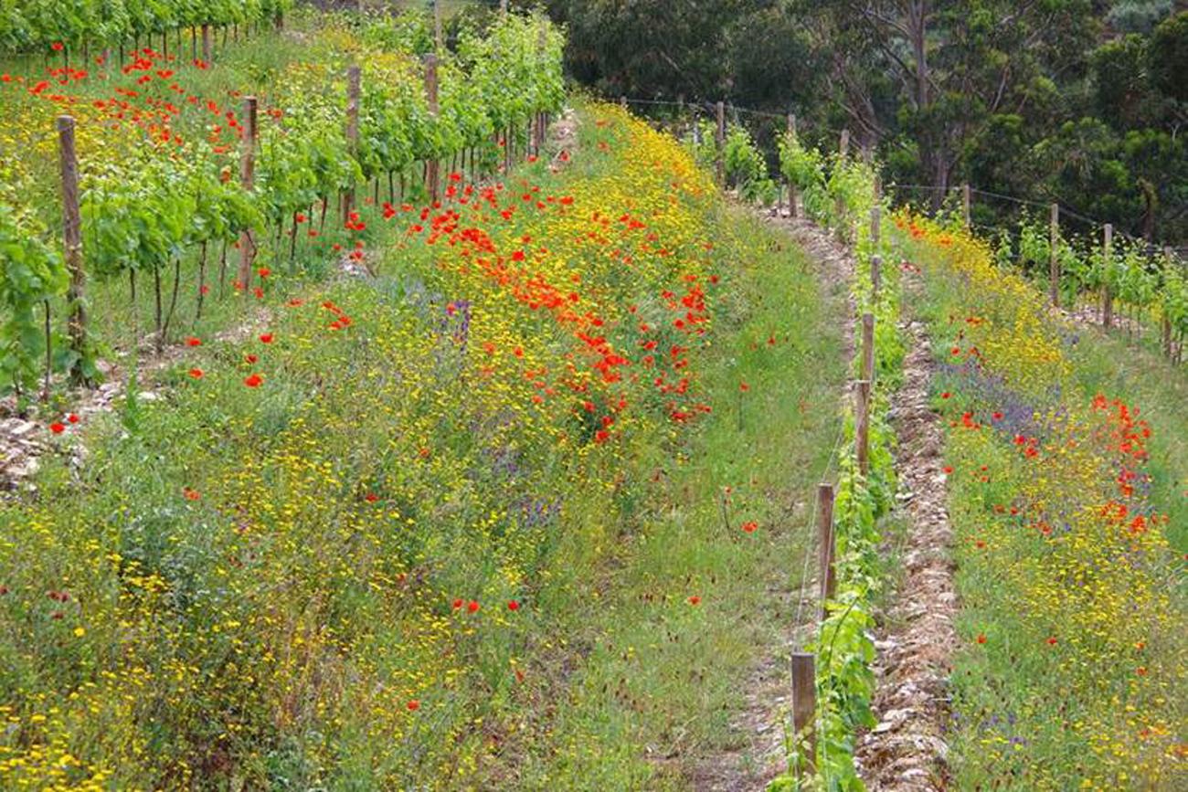 How do organics and biodynamics affect a vineyard's carbon footprint?