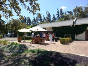 Olsen Vineyards