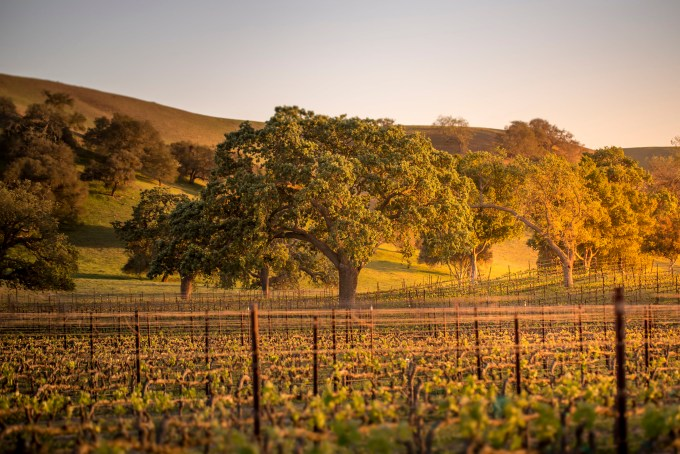 Come explore the best Santa Barbara wineries with our top 7 list of places to visit.