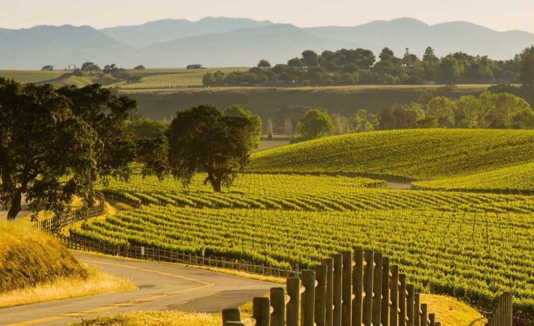 Santa-Ynez-Wine-Tours-Wine-wineries-2