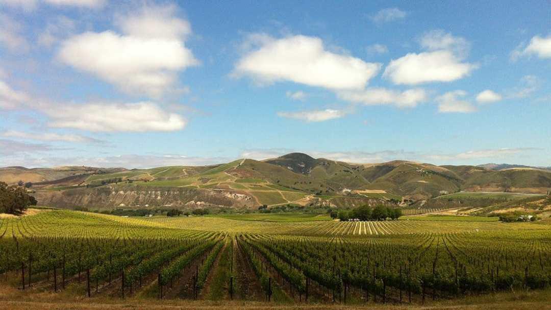 Santa Rita Hills