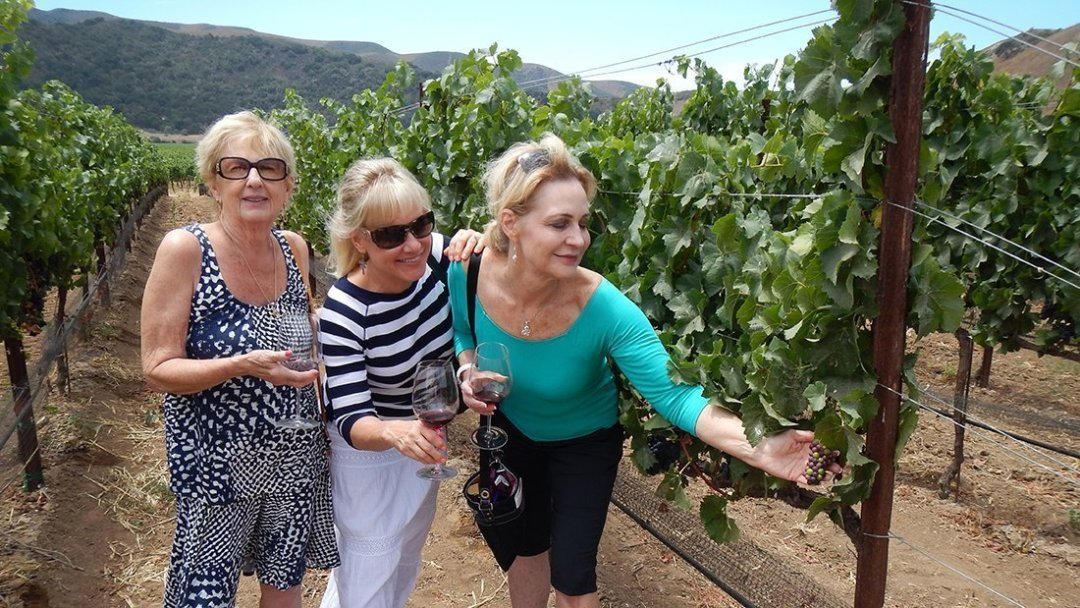 Wine in the Vines