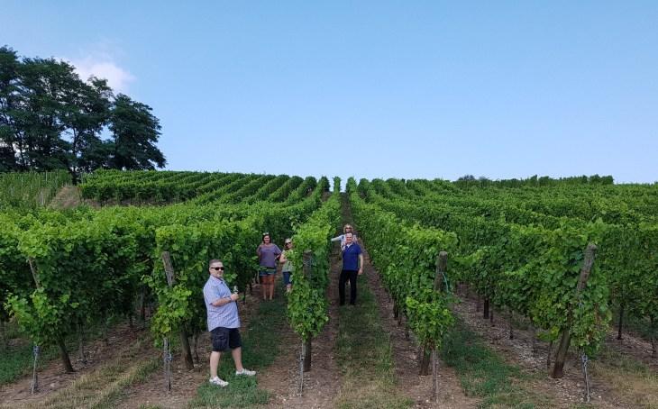 Vineyard fun