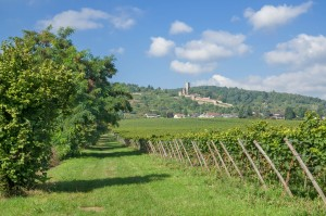 The Wine Village of Wachenheim
