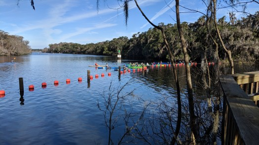 You can either walk along the docks and boardwalk or take a kayak tour out on the river to see the manatees at Blue Springs State Park