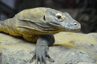 World Lizard Day - Animal Experiences At Wingham Wildlife Park In Kent