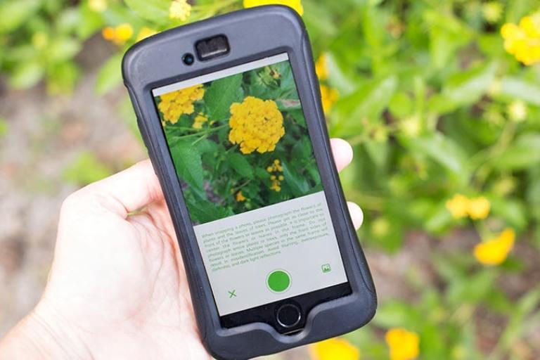 تطبيق للتعرف على النباتات بمجرد تصويرها للاندرويد
