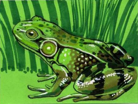 atc-01-01-17_frog
