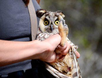 Montana Owl Tour