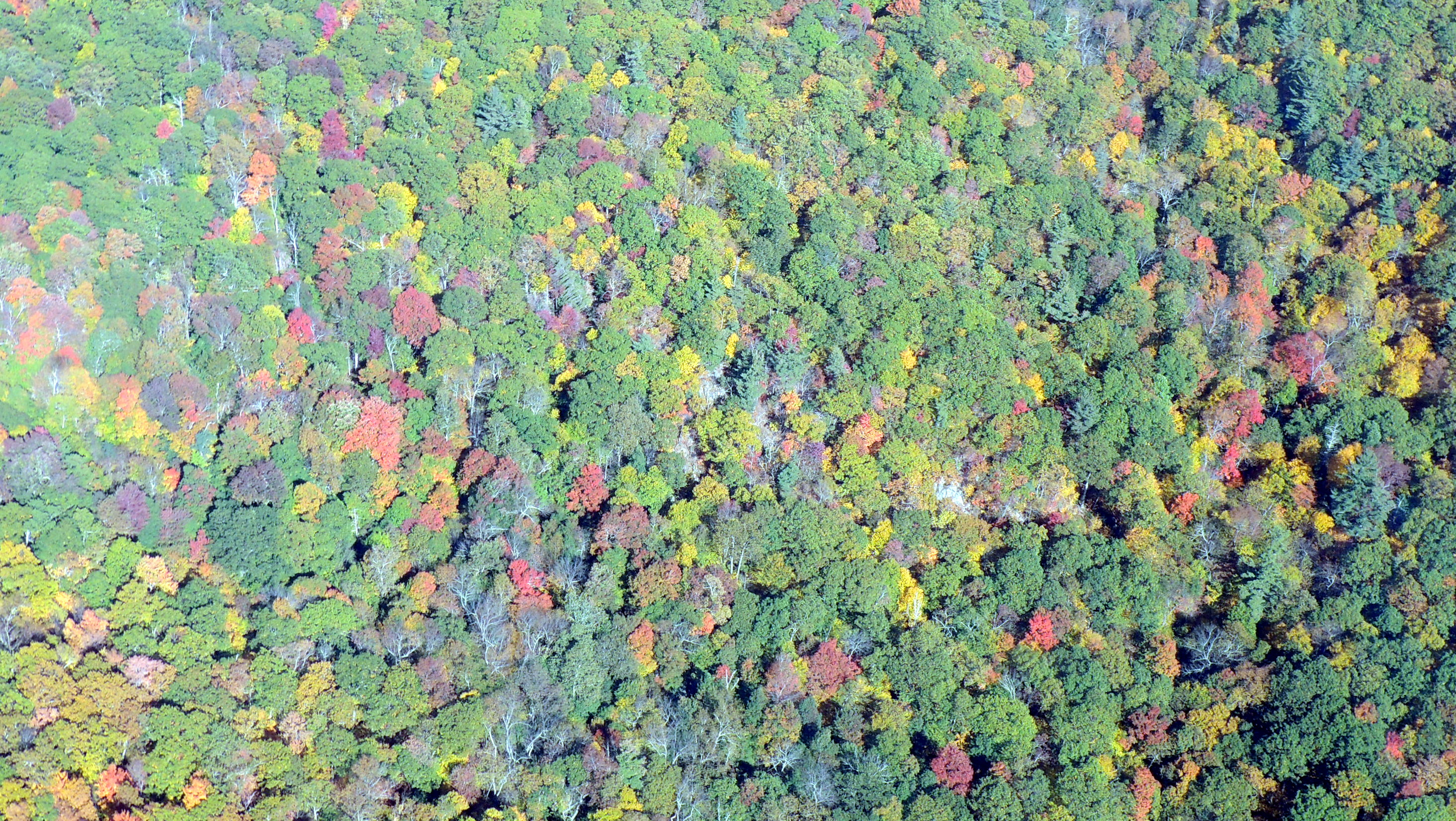 Flying over the Blue Ridge Mountains...... Beautiful Fall Colors !