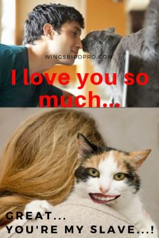 why cat love me