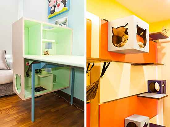 Find Out These Creative Design Ideas Your Cat Room