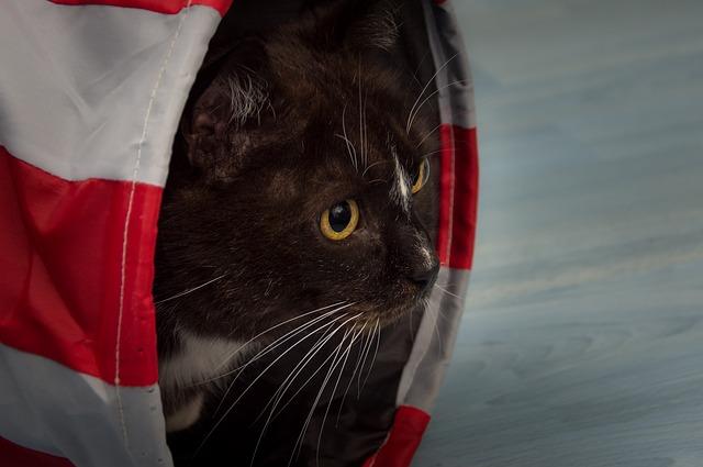 cat-1168012_640