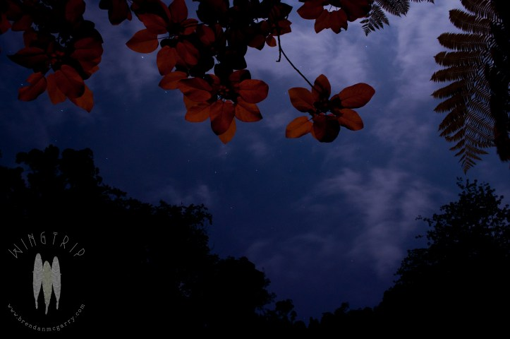 Firelight lighting the leaves of a rainforest tree in Gunung Leuser National Park, North Sumatra. (2011)