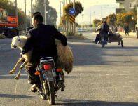 imagen habitual en las zonas rurales durante el Kurban Bayrami