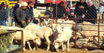 Zonas de venta de ganado