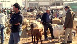 Compra de ganado para el Bayram