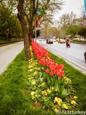 Parterres con tulipanes en Besiktas